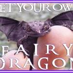 fairydragon100